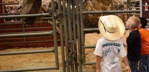 Kids at Livestock Exhibit in RodeoHouston
